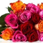 Miflora Rosenrallye: 28 bunte Rosen für 18,90€ inkl. Versand