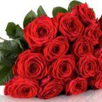 Miflora: 20 Red Naomi Rosen für 18,90€ inkl. Versand