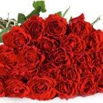 Miflora: Rosen-Rallye: 30 Rosen für nur 19,90€ inkl. Versand