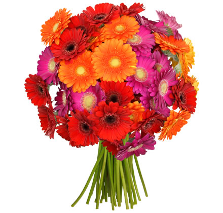 Angebot Deal Aktion Blumenstrauß Gerbera