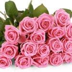 44 pinke Rosen für 24,98€ inkl. Versand