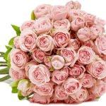 45 pinke Rosen für 24,98€ inkl. Versand