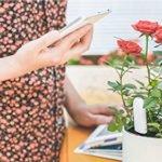 Xiaomi Mija Pflanzensensor mit App-Bedienung für 13,12€ inkl. Versand