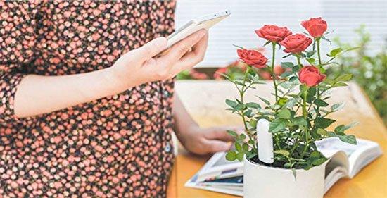 Pflanzensensor Angebot Deal Pflege Pflanzen