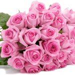33 pinke Rosen für 19,98€ inkl. Versand