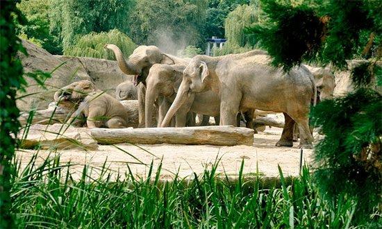 Deal Köln Zoo Tagesticket Aquarium Angebot Sparen